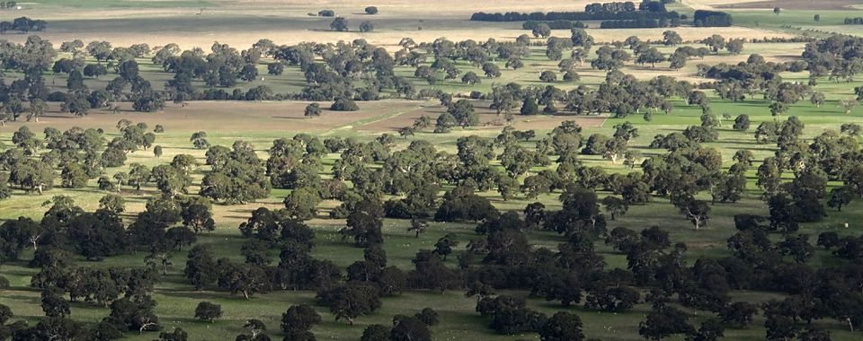 The Wimmera plains - Vic